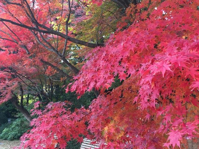 紅葉も美しく、夜間の「紅葉のライトアップ」は毎年期間限定で行われています。