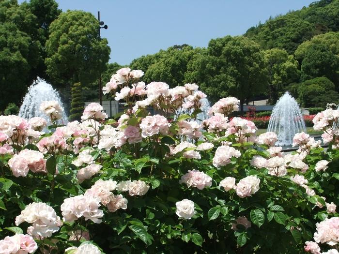 海の見える、四季折々の花が美しい庭園。有名なバラ園のほか、アジサイ園、花菖蒲園、梅林、温室などがあり、神戸市民の憩いの場となっています。