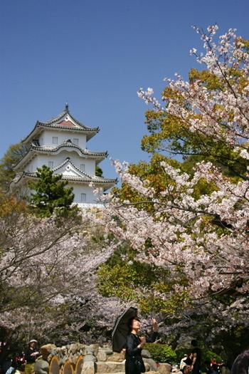 明石城は、県立図書館や県立競技場などを含む明石公園の中心にあります。 天守閣はありません。「本丸跡」と「櫓」があります。ボートに乗れる池があり、季節の花が咲き、広場では様々なイベントが行われています。