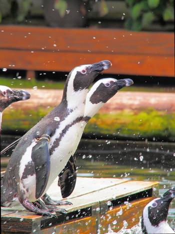 「花鳥園」の名の通り、園内ではインコやフクロウ等の鳥達他、愛らしいペンギンとも直接触れ合えます。毎日、バードショー等のイベントスケジュールが盛り沢山に催されているので、いつ出掛けても動物たちと楽しく過ごせます。