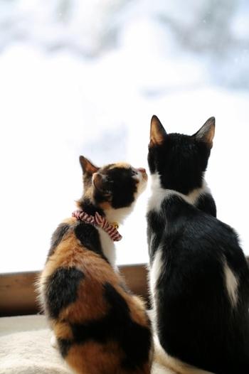 また愛情表現をする際は、「こよなく」という言葉が似合います。「こよなく愛している」「こよなく親しんだ」などという使い方をすると、想いに深みが出ますよね。