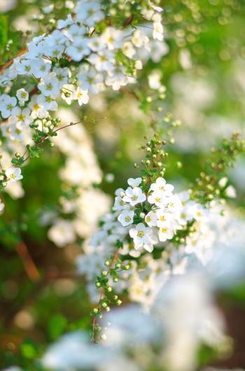 日本原産といわれていますが、昨今、地域によっては、減少が心配されているとか。花言葉どおり、懸命に咲いているさまが、けなげに映ります(^.^)