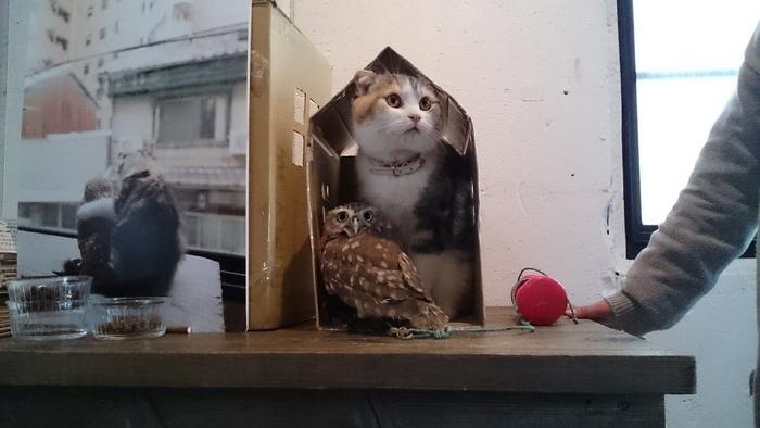 その理由がこのかわいらしさ。ふくろうのフクと猫のマリモは、とっても仲良し。このふたりに会おうと、多くの人が「HUKULOU COFFEE」を訪れています。