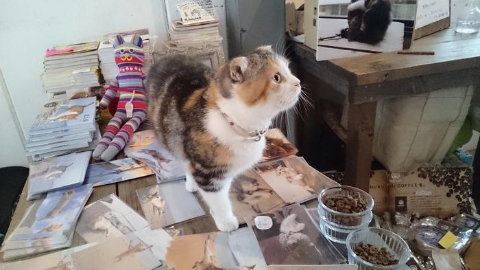 もふもふコンビに癒される。ふくろう&猫カフェ「HUKULOU COFFEE」