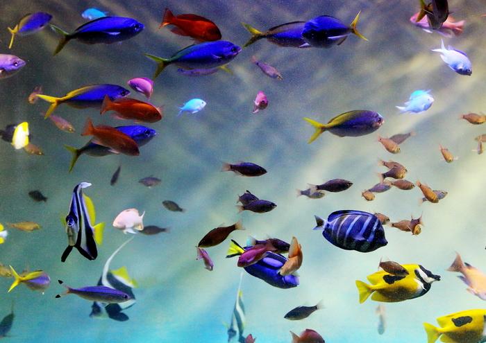 瀬戸内海の小魚やスナメリに会える水族館も人気!