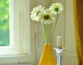 「希望」の花言葉を持つ白いガーベラは、贈る相手を選びません♪