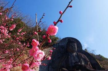 そして大仏広場で花を眺めつつ、石を切り開かれたような不思議なスポットを是非体感してみてくださいね。
