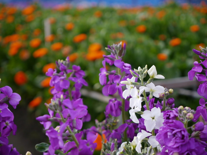 いかがだったでしょうか?千葉県の南房総は気候も良くお花もカフェも豊富。次回のお休みにはお友達を誘って、ドライブかねて南房総に訪れてみてはいかがでしょうか?