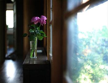 ガラス素材のフラワーベースは、その透明さがやっぱり人気。水を吸い上げる茎の美しさまで見ることができます。