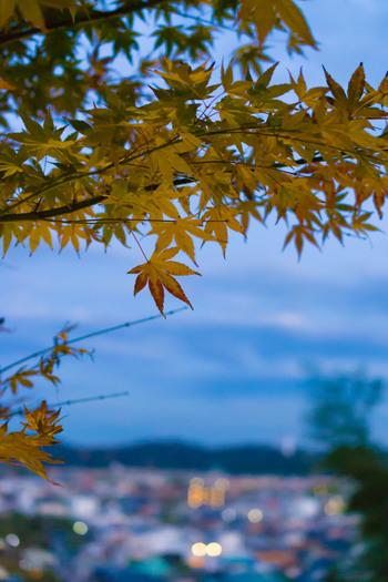 こちらは長谷寺空の景色。高台からの美しい景色は、いつまでも眺めていたくなります。