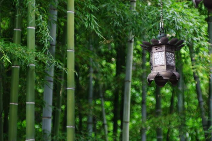 """1000本もの竹が生えている、報国寺。別名""""竹の寺""""とも呼ばれています。美しくそびえ立つ圧巻の景色。凛とした空気が漂う竹の庭に佇むと、一瞬息をのみます。"""