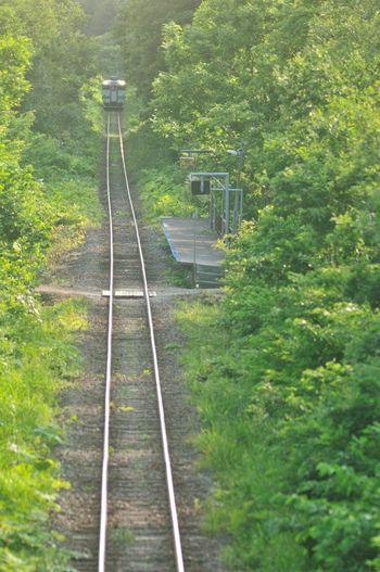 桑園駅と新十津川駅を結ぶ札沼線の沿線上にある豊ヶ丘駅は、1960年に開設された無人駅です。鬱蒼と茂る森の中に、片面ホームのみの小さな無人駅がぽつんと佇む様は、まさに秘境そのものです。