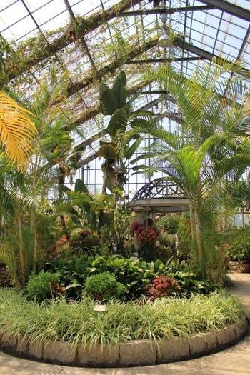 植物園もあり、南国の植物を色々見ることもできますよ。