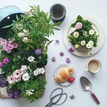 食卓にも春が来た♪食べられるお花【エディブルフラワー】を使ったレシピ集