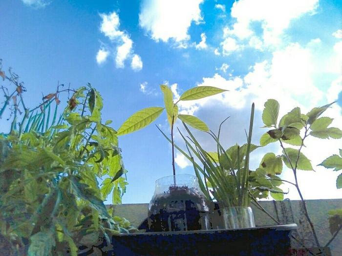 広い畑がなくても大丈夫!鉢植えなら窓辺やベランダで小さなガーデニングを楽しめます。