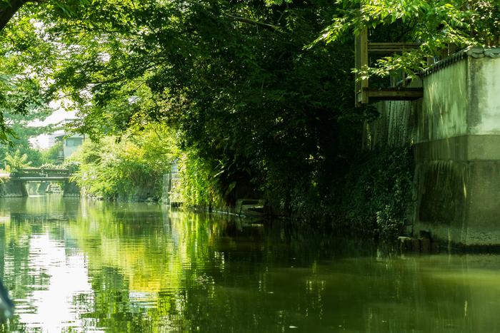 夏の柳川は緑豊かで川の流れが心地良く感じられます。季節によっては、鴨や亀の姿を見ることもできます。