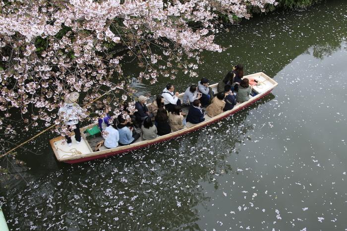 桜が咲く頃の川下りは、一生記憶に残る思い出になるでしょう。川下りしながら、武家屋敷などの古い建物を眺めて古に思いをはせましょう。