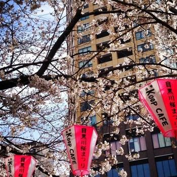 すぐ目の前が目黒川となっているので、お花見のシーズンには桜並木がきれいです。この時期には例年予約が増えるので、お出かけの際にはお問い合わせがオススメです。