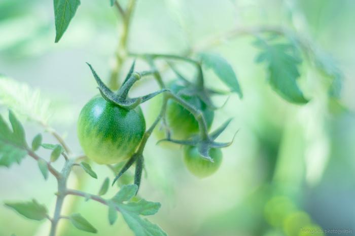 食育という言葉もすっかり世間に馴染んで、最近では産地や生育環境などの表示も良く見かけるようになりました。生産者さんの顔が見える食べ物は安心感がありますよね。  今回は、野菜たちを自分で育てる方法をご紹介します。 育てていく過程で一つ一つの実や葉っぱにも愛着が芽生えてきて、最後には育てた野菜を味わう喜びもあります。 腕によりをかけて立派に育てた野菜たちは、新鮮なうちに美味しく頂いちゃいましょう。