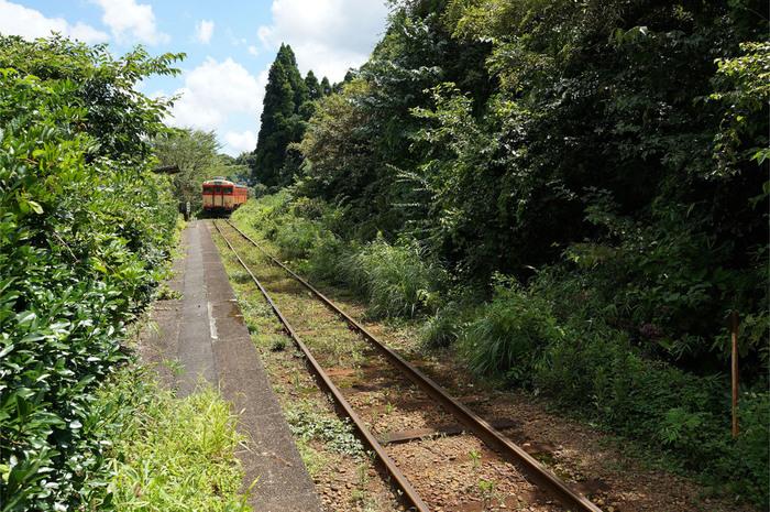 ホームと線路が鬱蒼と茂る樹々で飲みこまれそうになっている秘境駅に、列車が乗り入れる瞬間は情緒満点です。日本に鉄道が乗り入れたばかりの開拓時代を彷彿とさせるノスタルジックな雰囲気が漂っています。