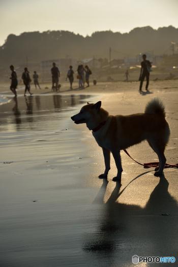 いかがだったでしょうか?鎌倉は犬にも人にも優しい街です。今度の週末はワンちゃんも一緒に是非鎌倉に訪れてみてくださいね♪