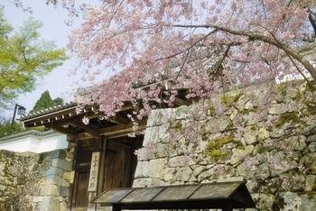 桜、つつじ、紫陽花、紅葉など、季節を感じる景色が楽しめる京都の三千院。広々とした境内には、美しい庭園や荘厳な建築物など見どころが満載です。