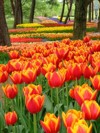 そして4月上旬~下旬にかけては色とりどりのチューリップも楽しめます*撮るアングルについつい時間を忘れてこだわってしまいそう…!