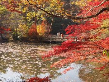 弓削牧場と神戸市立森林植物園は隣接しているので、植物園を散策するのもおすすめです。四季折々の表情を見せてくれる自然の中を、のんびりと散策してみてはいかがでしょうか。紅葉の季節は特に美しく、池などもあるので絶好の写真撮影スポットです。