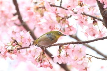 春の定番レジャー、お花見。はらはら舞う桜の下で、みんなでワイワイするのもいいけれど、散る桜を眺めながらのんびりくつろぐ、贅沢カフェタイムはいかがでしょうか。今回は、お花見ができるテラス席のあるカフェをご紹介します。