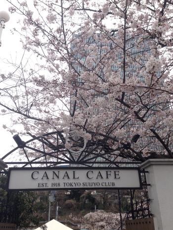 お花見ができるオープンカフェとして外せないのが、カナルカフェ。神楽坂の下、外堀にかかる牛込橋のたもとにある、桟橋のカフェです。