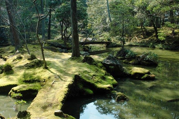 池に通じる橋と小島、どちらも苔で覆われていてとても雰囲気があります。