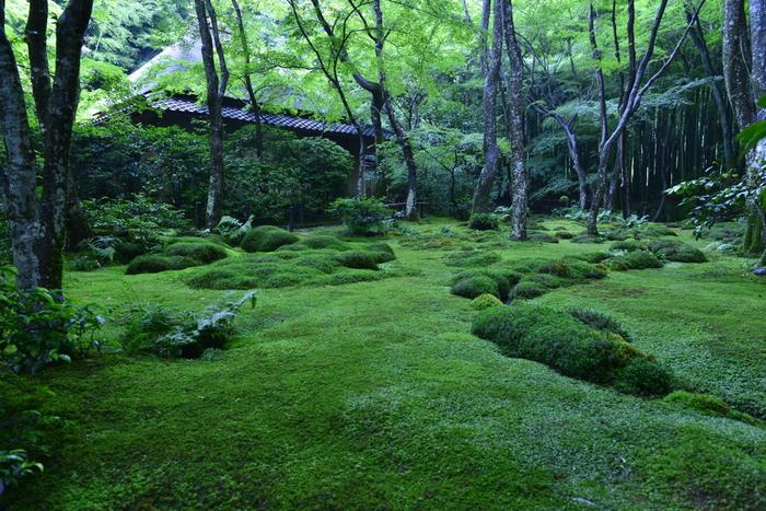 苔に覆われた庭の奥に見えるお寺。 悲恋の末に出家した祇王を思い起こさせる佇まいです。
