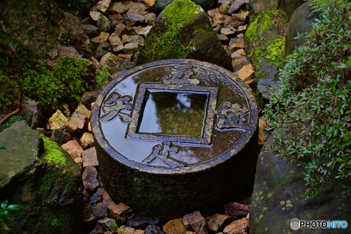庭のどこを切り取っても、美しい苔に心が癒されます。日本に生まれて良かった、と思う瞬間ですね。