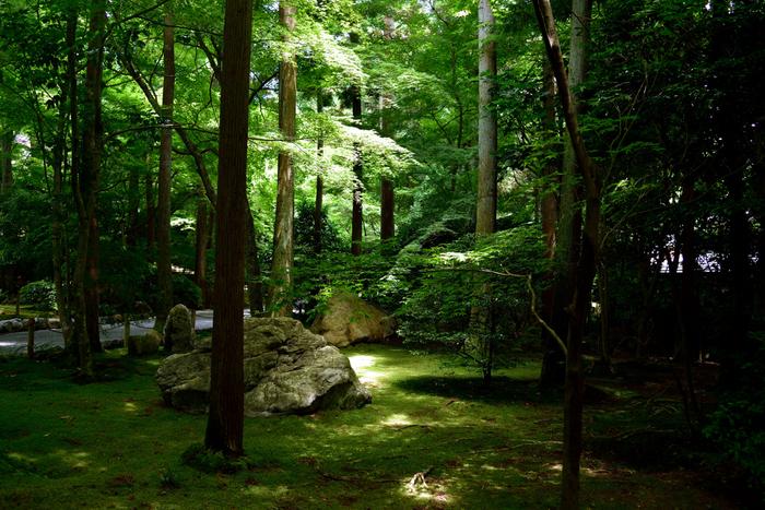 ひっそりとした時が流れる庭。大岩を覆う苔など、隅々までじっくり眺めたくなります。