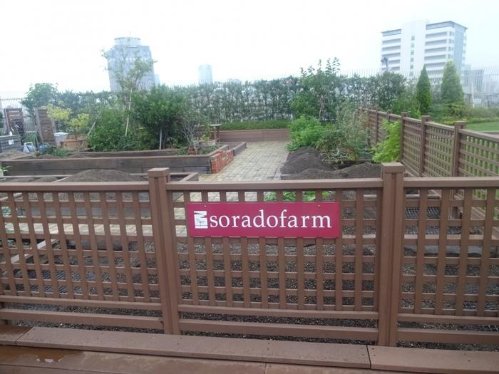 貸菜園「ソラドファーム恵比寿」もあります。都会のど真ん中で土のぬくもりを感じられるってなんだかいいですね♪