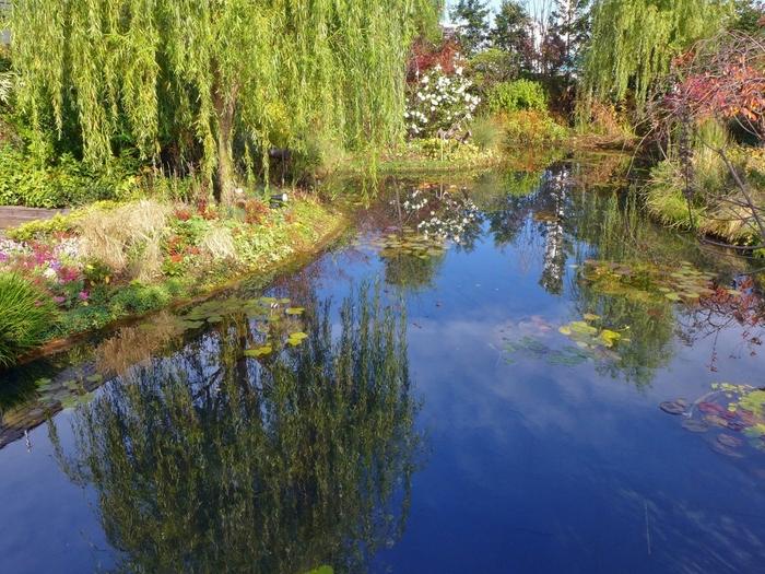 こちらは印象派画家のモネの絵画をイメージしてつくられた「睡蓮の庭」です。大きな池にはたくさんの睡蓮が植えられていて、幻想的な雰囲気を醸し出しています。