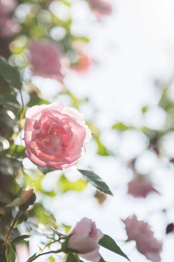 寒い冬も終わり、春はもうすぐそこまで近づいています。 あちこちから漂うお花の香りに誘われて、足取りも軽くなる季節ですね。 今回は、都内から日帰りで行ける神奈川県の素敵なガーデンをご紹介します。ゆっくり出来る休日に、是非足を運んでみてはいかがでしょう…
