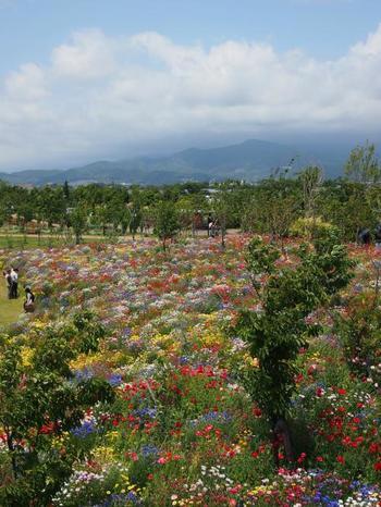 平塚市の北西部にある神奈川県立の施設です。92000㎡の広さを持つ園内はフラワーゾンとアグリゾーン、研究棟ゾーンに分かれており、園芸・農業双方の視点からの屋外植物園…といった感じに造られています。