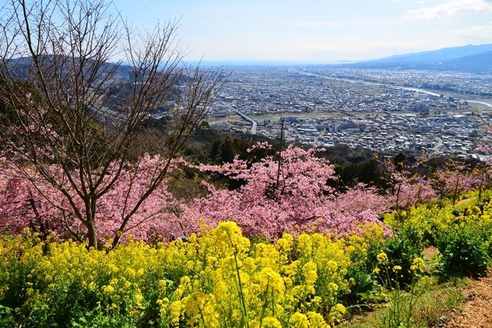 神奈川県の北西部にある松田町、JR松田駅・小田急新松田駅から北約1kmの、小高い丘…いや、山の中腹にあるハーブガーデンです。かれこれ20年は運営している、県下でも歴史あるガーデンです。天気の良い日には富士山や相模湾、伊豆半島などの眺めが良くとても気持ち良いです。春には桜と菜の花が咲き乱れ、ピンク&黄色の美しいコントラストを一目見ようと、多くの観光客が訪れます。