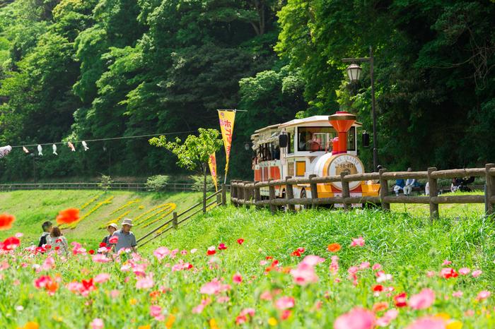 斜面一面のコスモス写真ですっかり有名になりましたくりはま花の国。京急線久里浜駅から南東へ徒歩15分、海を望む高台にある市立公園です。