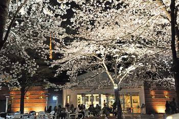 六本木のアークヒルズの裏、スペイン大使館の並びにある大人気のカフェ。桜のトンネルができる路地沿いにあるオシャレなお店です。