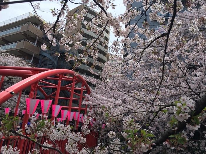 お店の前と、2Fのテラスが、イートインスペースになっています。おすすめは、2Fのテラス席。レトロな赤い橋と桜の共演が楽しめ、川沿いの道を歩くのとはまた違った表情のお花見を楽しむことができます。