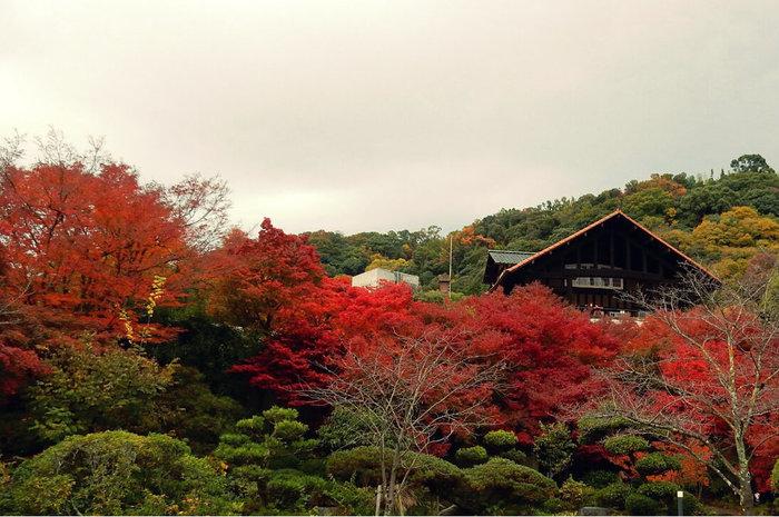 庭園には多くのカエデが植えられており、晩秋には燃えるようなカエデの赤色が広がります。