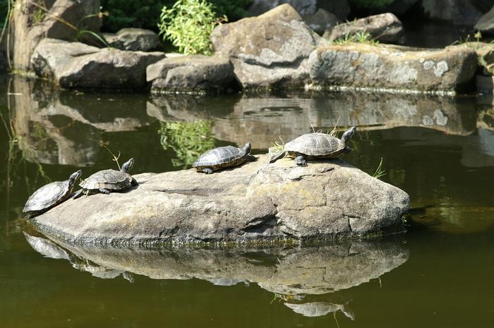 公園の中には池もあり、こんな微笑ましい一場面を見る事が出来るかもしれません♪ 池のほとりには菖蒲がたくさん咲きます。池上の木道や四阿を散策しつつ、和風の景色も楽しんでみては!近くには少し早い時期に見頃を迎えるフジ棚もあります。