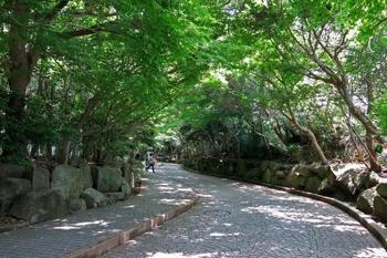 鎌倉文学館へ向かう途中には、緑あふれる小路を歩いて行きます♪森林浴しながら、文学館へ向かいましょう…