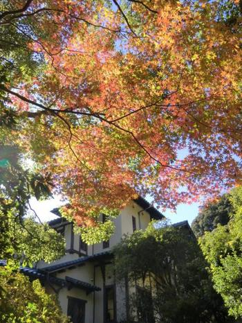 秋には紅葉の紅葉が楽しめます。バラのシーズンとはまた違った趣ある雰囲気を楽しんでみてはいかがでしょうか!