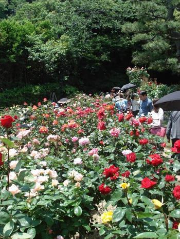 それぞれバラの見頃に合わせて春はバラまつり、秋は鎌倉文学館フェスティバルなどが開催され、園庭を会場にして、コンサートや朗読のイベントも行われます。