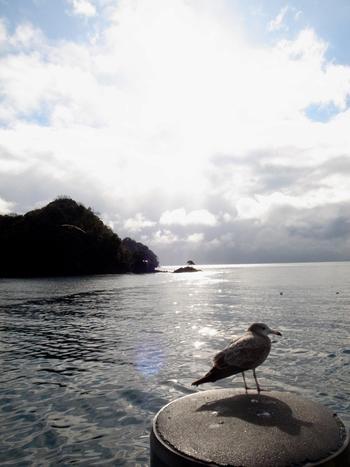 潮待ちのカモメ。海を抱いた小さな町の一風景。