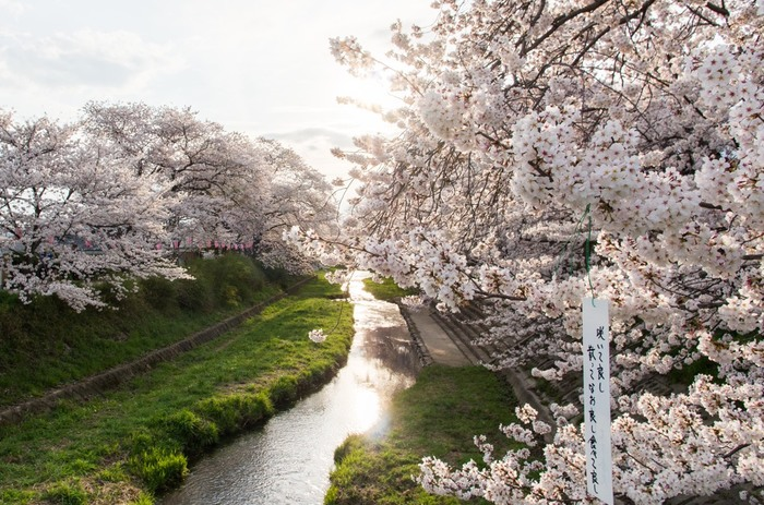 地元民が教えます!関西の穴場「お花見」スポットで桜を堪能しよう!