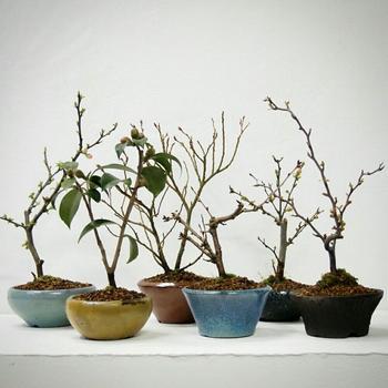 おしゃれなインテリア好きの中で大人気のミニ盆栽。お気に入りの植物と好みの盆栽鉢を探して、ミニ盆栽を始めてみませんか?